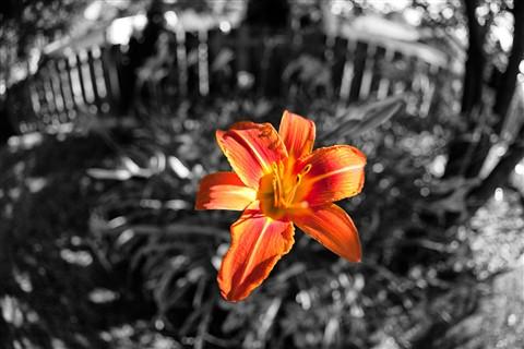 X_Flower