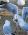 beak full of food and beak without