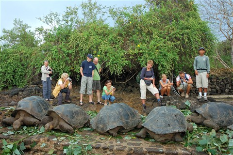 Huge Galapagos turtles.