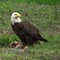 3-18-14 eagle 132 (1 of 1)