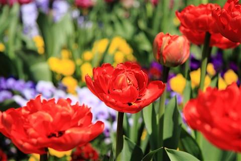 Flower_Mainau_Konstanz_031