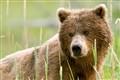 bears_0575e