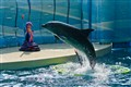 Dolphin show,  Enoshima Aquarium, Japan