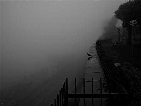 fog_pidgeon