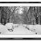 59526524_Snow_In_Brooklynwtang
