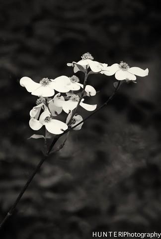 flowers-5-Edit-Edit-Edit