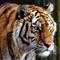 Tiger2303mod