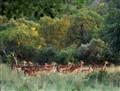 impalas at dikhololo