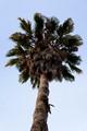 Pal Tree