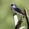 2-Teaneck Birds9