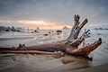 Driftwood, Winter Sunset