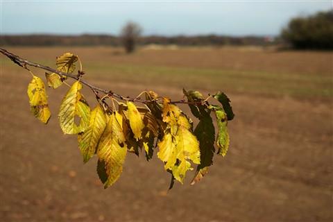 Autumnscape-02-lr
