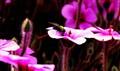 Pollen bearer
