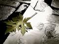 Leaf&Water