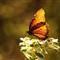 Butterfly #  14