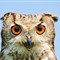 DGB_8017_Eagle Owl