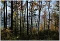Trees Curtain