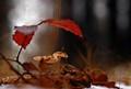 life under red leaf