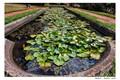 Madeira's garden