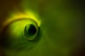 Eye of leaf
