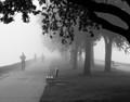 Foggy Runner