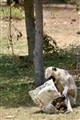Monkey Reads Paper