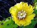 Cactus Needles:  Needed or Needless ?