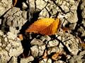 Mud Leaf