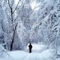 Road in a snowy kingdom