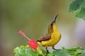 Just a Sunbird