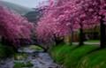 Pinhole Blossoms