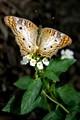 Zoo Butterfly