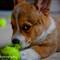 Portfolio_Pets-2