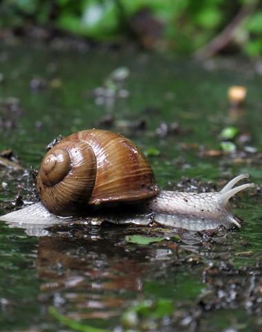snailinrain