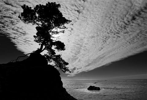 crescent_tree