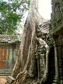 Trees Win the Fight at Ta Prohm Temple