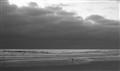 Newport_Sandpiper