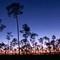 everglades pine forest at sunrise 1136