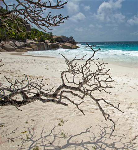 Seychelles_95Dp review shots