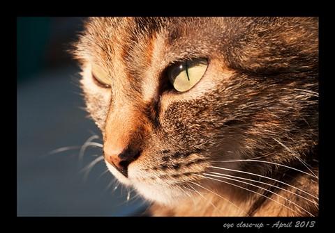 eye-close-up