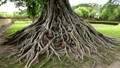 Revered Roots