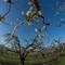 Orchard001