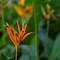 29 august 2013 flower 1