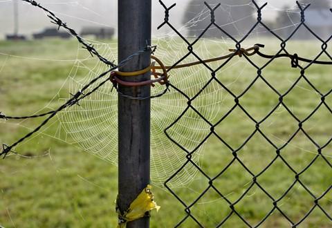 Fecey Web