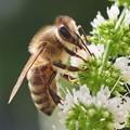 punk bee