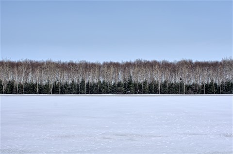 Dual Row Trees on the Snow