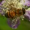 Bee 1980