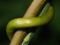 Lili'uokalani Botanical Gardens