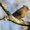 Birds14_Jan14_199_eds