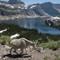 goats_landscapes-2